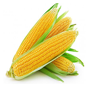 Sweet Corn (big)